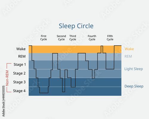 sleep circle with sleep stage to analysis of brain activity during sleep Fototapet
