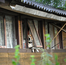 Funny Beagle Dog With Long Ears Looks Out Of The Window Of A Village House, Dangling Its Paws, Meme