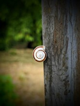 Snail Against The Background Of Evening Light On An Iron Fence