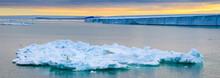 Panoramic, Polar Bear (Ursus Maritimus) Stranded On Pack Ice, Svalbard, Norway