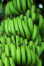 Green Banana Agriculture Field In India