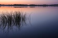 Sunset Lake With Reeds In Rural Minnesota, USA North Turtle Lake