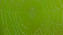 Close Up Of Spiderweb With Dew Drops Early In The Morning With A Green Background In Rural Minnesota, USA