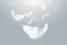 Light And Soft White Feathers Falling In The Sky.
