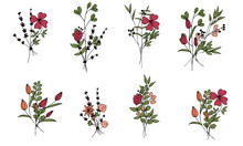 Set Of Cute Field Mini Bouquets Of Vector Flowers And Branches In Doodle Style On A White Background. Simple Flowers And Plants. Isolated Objects.