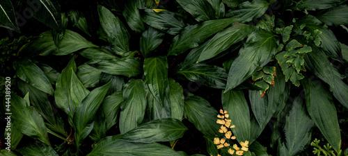 Fotografija Full Frame of Tropical Leaves Texture Background. tropical leaf