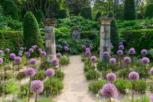 Billede på lærred Ail d'ornement, colonnes, Jardin Agapanthe, Grigneuseville, 76, Seine Maritime,