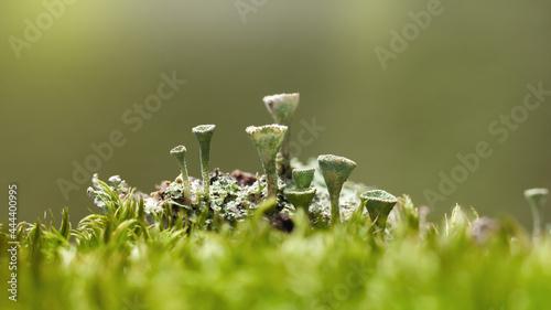 Foto Lichen Colony