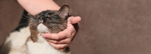 Happy Cat Lovely Comfortable Sleeping By The Woman Stroking Hand. World Pet Day. Love To Animals Concept . Banner, Copt Space