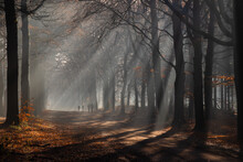 People Enjoy The Early Rays Of The Sun In The Forest.