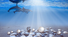 A Group Of Dolphin  Swimming Underwater In The Blue Tropical Sea - Blue Sea Or Ocean Water Surface And Underwater With Sunny Day - Many Seashells And Pearl In The