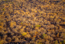 Bushveld In Fall Colors Panorama View In Kruger National Park, South Africa