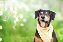 Portrait Of A Black Dog In Chamomile