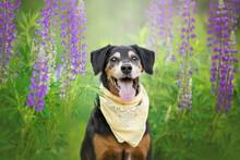 Black Dog Portrait In Purple Lupins