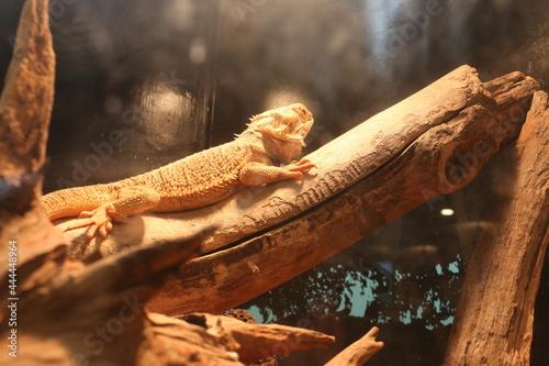 Slika na platnu 気持ち悪い爬虫類