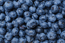 Fresh Blueberries Background. Macro Texture Of Blueberry Berries. Summer Healthy Food.Selective Focus