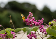 Beautiful African Butterfly On A Flower Collects Nectar