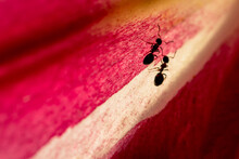 Ants On A Leaf