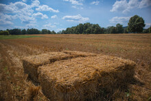 Hay Bales In Freshly Cut Straw Field