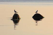 Seagulls On The Seashore During Sunset