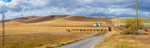 Fotografie, Obraz Rural Alberta Canadian prairie grassland landscape countryside background panorama
