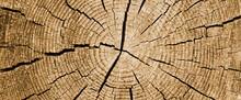 Holzmaserung, Jahresringe Eines Anschnittes Eines Baumstammes In Beige Und Canvas, Hintergrund Und Texture