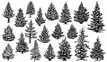 Christmas Snowy Pine Trees. Xmas Snow Covered Pine Trees Silhouettes, Evergreen Coniferous Woods Vector Illustration Set. Christmas Trees Silhouettes