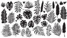 Tropical Leaves Set 1