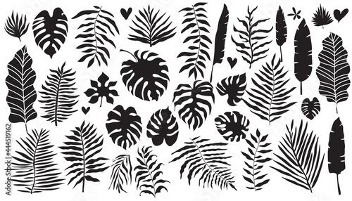 Fotografia Tropical Leaves set 1