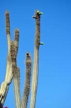 Decorative Plants In Sharm El-Sheikh. Egypt