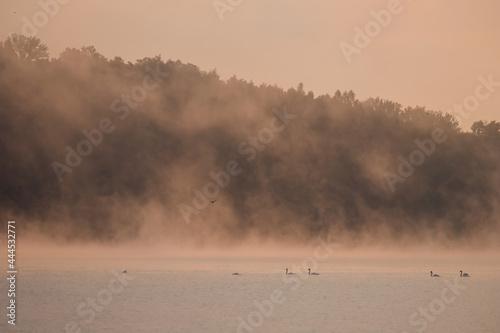 Łabędzie we mgle