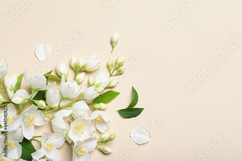Fototapeta Flat lay composition with beautiful jasmine flowers on beige background