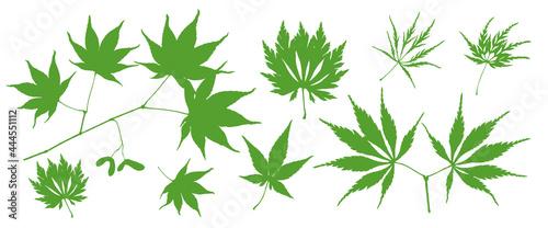 Obraz na plátně Hemp Leaves
