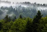 Mgła w górach między drzewami