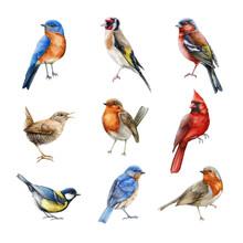 Bird Set Watercolor Illustration. Finch, Red Cardinal, Eastern Bluebird, Goldfinch, Robin, Wren Image. Realistic Garden And Forest Birds Collection. Beautiful Backyard Avian Set On White Background