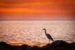 Sonnenuntergang mit einem Fischreiher
