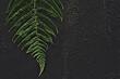 Leaf of fern plant background