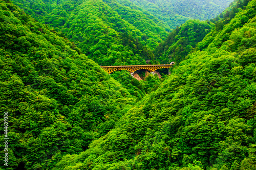 Obraz na płótnie 橋