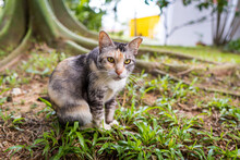 Closeup Of An Adorable Cat With Yellow Eyes On The Ground Covered In Greenery Under The Sunlight