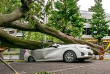強風による倒木で潰された乗用車
