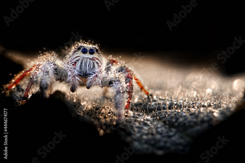 portrait of spider with bokeh Fototapete