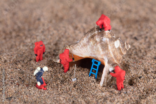Fotografiet The biochemical miniature doll team is studying the dried and dead conch