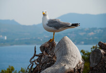 Selective Focus Of A Seagull Stands On A Piece Of A Tree Near The Sea