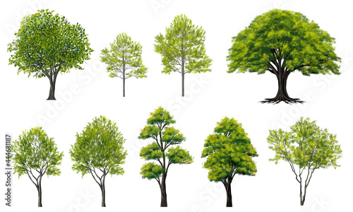 Fotografie, Obraz watercolor tree side view isolated on white background  for landscape and archit