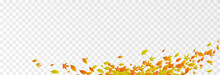 Vector Leaves On Isolated Transparent Background. The Wind Blows Off The Leaves, The Wind Blows. Autumn. Leaves Png.