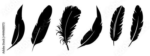 Tablou Canvas feather vector collection