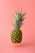 Flying Fresh Pineapple Against Powder Pink Pastel Background. Minimal Levitate Fruit Concept With Shadow. Summer Creative Idea.