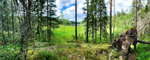 Wide Panorama Of The Forest Edge Overlooking The Lake. Inverted Pine Root. Tall Trees Under Blue Skies. Karelia. North.