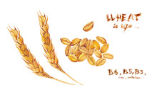 A Set Of Wheat Ears , A Handful Of Grains And Inscriptions In Watercolor. Print, Postcard, Calendar Or Poster.