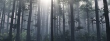 Forest In The Fog In The Morning At Sunrise, Trees In The Rays, Park In The Haze, 3D Rendering